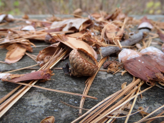 Evidence of filling meals for local critters: oak acorn caps and pine cone pieces. Come be filled yourself!