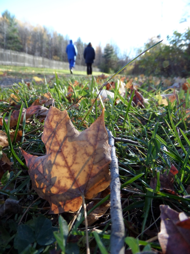 Meditative walking, part of the wonderful November weekend at Still Point.