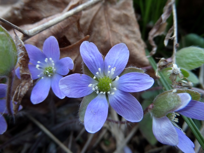 April wildflowers: remember them?
